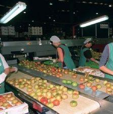 Manipulador Alimentos Curso Prevención Riesgos Laborales Sector Manipulado Prevención Almería Online roquetas ejido vicar cañada madrid nijar berja murcia
